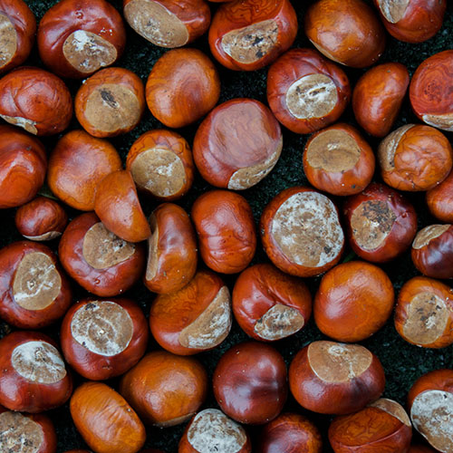 How to Dry Chestnuts